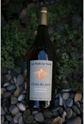 Les pieds sur Terre - Chardonnay Semaine 16 - 2017